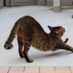 効果的な猫のびダイエット